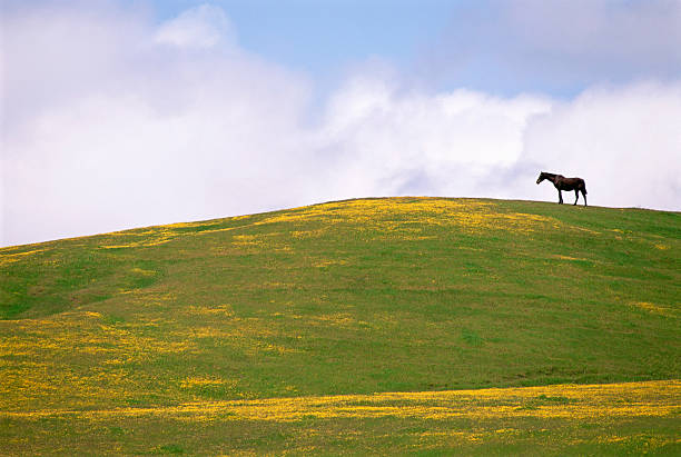 Lush grazing for horses in the meadows of California.