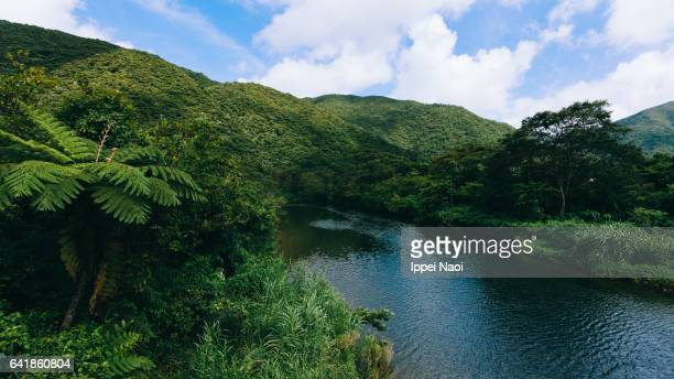 Lush green forest and river, Amami Oshima Island, Japan