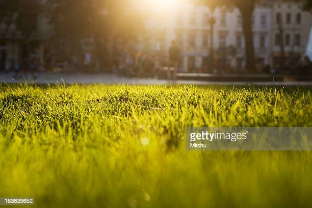 Lush green grass against blinding sun with obscured building