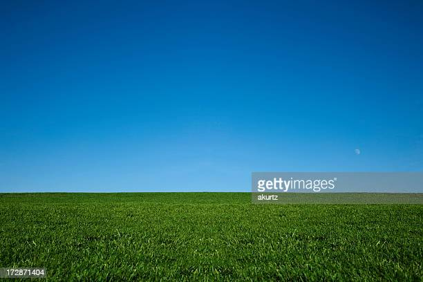 Lush green grass and a cool blue sky