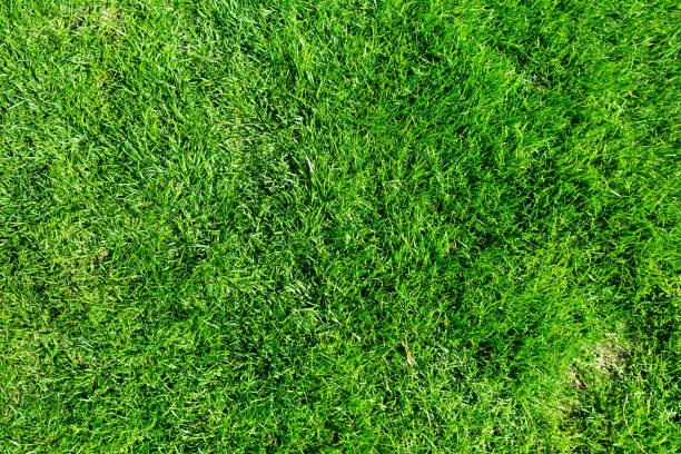 best turf for Melbourne