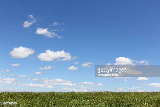 Lush green grass with blue skies and billowy clouds