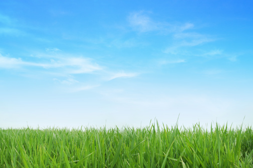 Lush green grass with blue sky background 156594823
