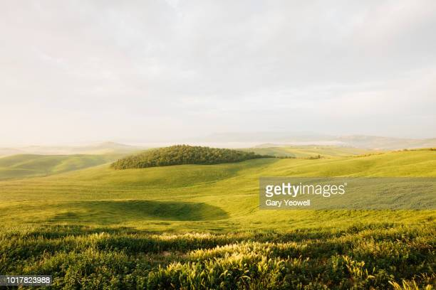 lush green landscape of tuscany - hill stock pictures, royalty-free photos & images