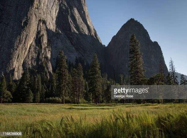 A lush green meadow near El Capitan is viewed on August 13 in Yosemite Valley California With the arrival of summer the estimated 600000 monthly...