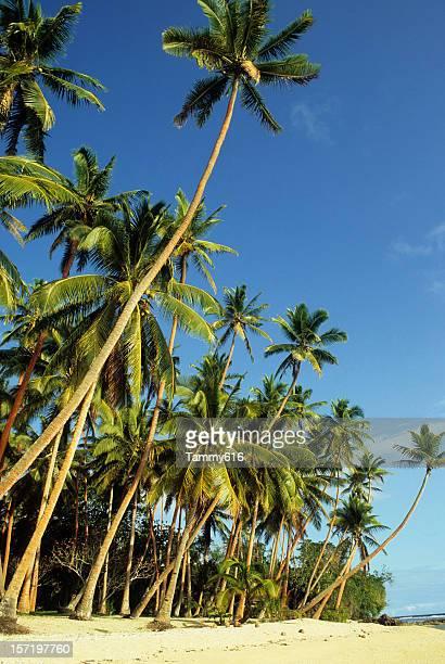 Lush Green Palm Lined Beach