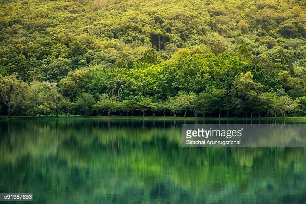 lush green park with reflection in the lake - provincia di songkhla foto e immagini stock