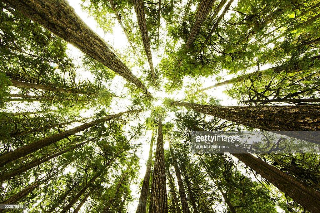 lush green rain forest. : Stock Photo