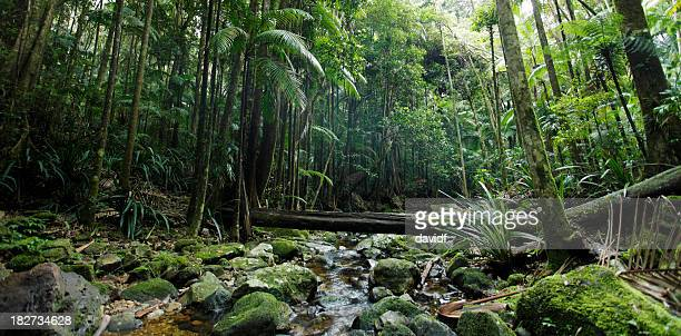 Lush Green Rainforest