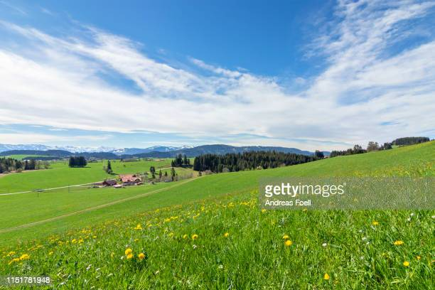 lush green spring meadow with yellow dandelions. snow-covered allgaeu alps in the background. bavaria, germany - andreas solar stock pictures, royalty-free photos & images