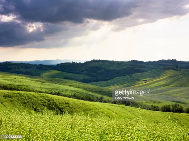 lush green summer landscape in tuscany - lush stock pictures, royalty-free photos & images