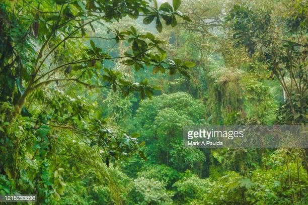 lush green tropical rainforest high in the andes mountains in ecuador - üppig allgemein beschreibender begriff stock-fotos und bilder