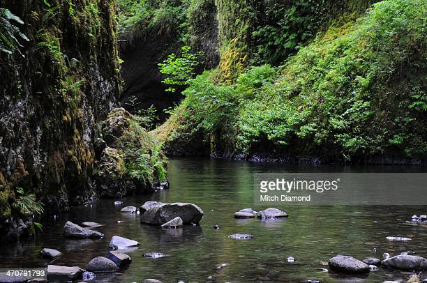 lush landscape in the Columbia River Gorge