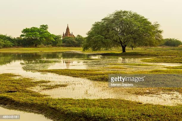 lush landscape with wide tree and temple - merten snijders - fotografias e filmes do acervo