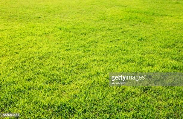 lush lawn - 芝草 ストックフォトと画像