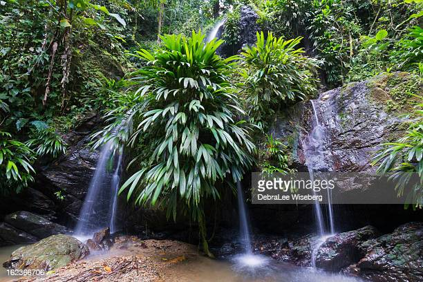 lush rainforest and falls - tobago stock pictures, royalty-free photos & images