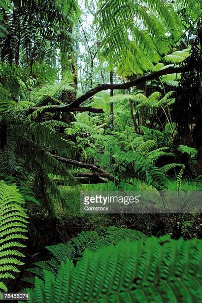 Lush rainforest , Hawaii