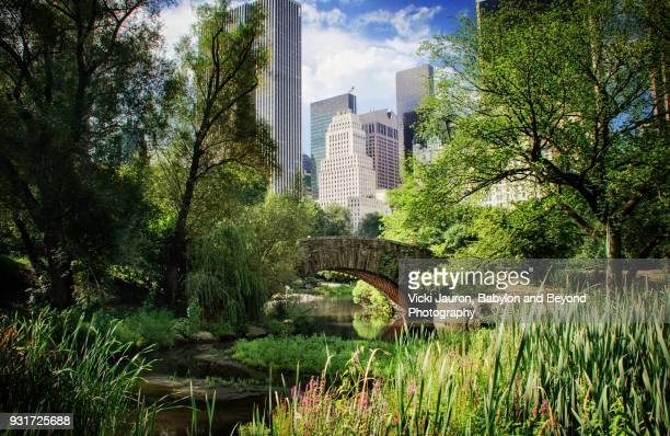 lush summer greens and central park's gapstow bridge - central park stock pictures, royalty-free photos & images