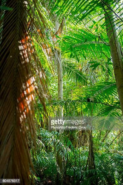 Lush tropical folliage