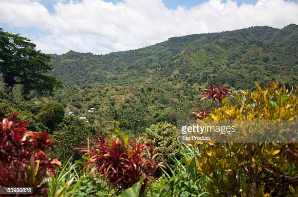 Lush, tropical hillside, rural Grenada