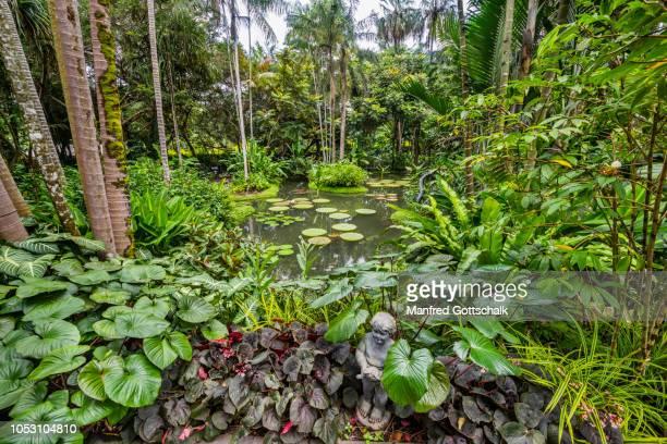 lush tropical vegetation singapore botanical gardens - singapore botanic gardens stock photos and pictures