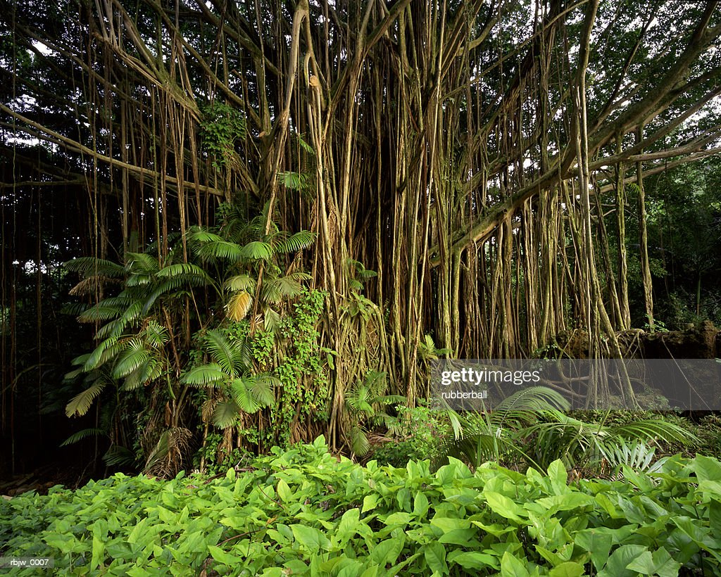 lush underbrush of a green bamboo forest in asia : Stockfoto