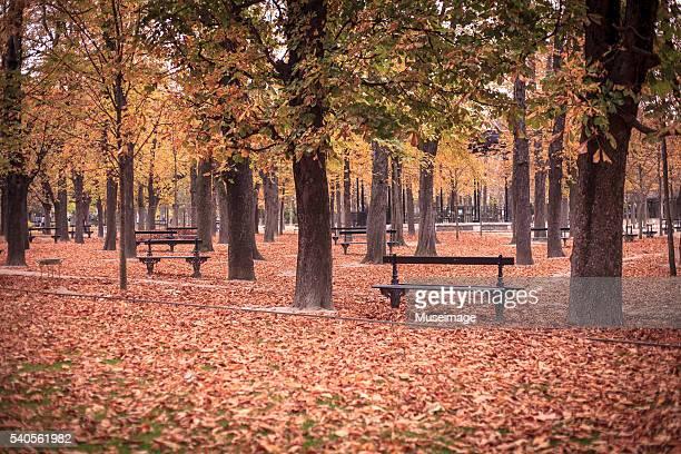 Luxembourg park in beautiful autumn season