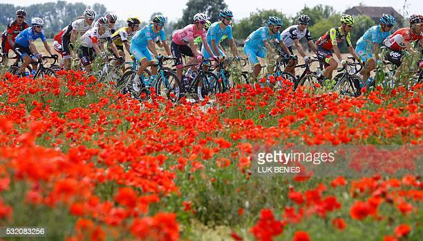 TOPSHOT Luxembourg's rider Bob Jungels of Etixx Quick Step wearing the Pink jersey of the overall leader rides past a field of poppies with the...