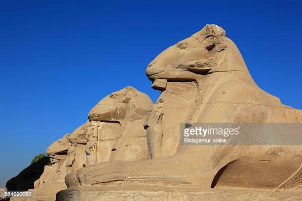 Luxor part of Aries Avenue Karnak Temple Upper Egypt UNESCO Worldheritage