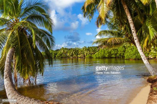 luxuriant vegetation - pierre yves babelon madagascar stock pictures, royalty-free photos & images