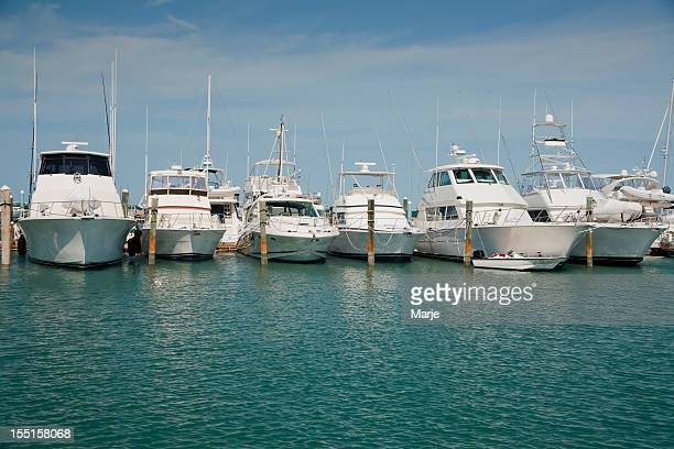 Luxury yachts docked in the water