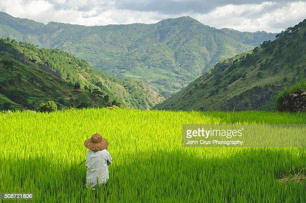 luzon rice famer - filipino farmer stock photos and pictures