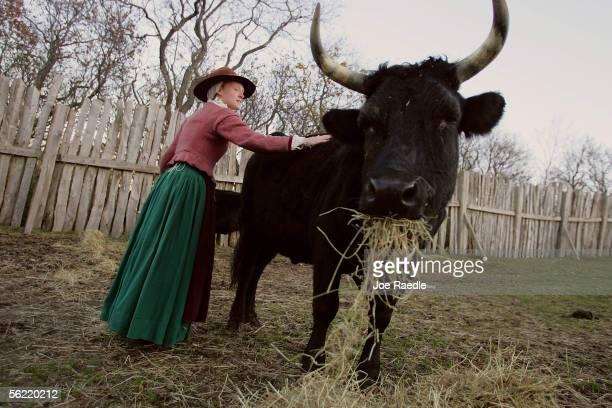 Lydia Hicks touches a cow as she feeds it in the 1627 Pilgrim Village at Plimoth Plantation where she and other roleplayers portray Pilgrims seven...