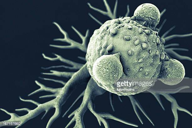 t lymphocytes and cancer cell - cancercell bildbanksfoton och bilder