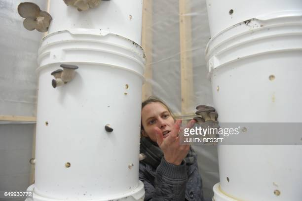 Lysiane Roy Maheu cofounder of Montreal urban mushroom farming startup Blanc de Gris is seen inspecting oyster mushrooms in one of the six...