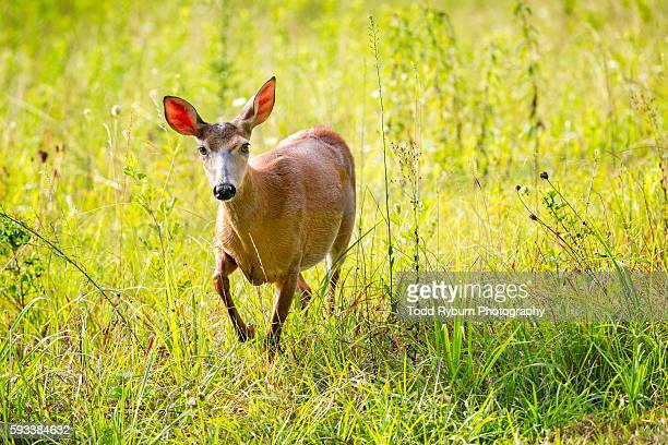 i'm coming - cades cove stock pictures, royalty-free photos & images