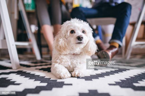 i'm going on work with my owner! - canine stock pictures, royalty-free photos & images