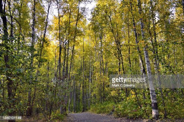 i'm going to let my legs move forward in search of nature's gems - chugach state park stock pictures, royalty-free photos & images