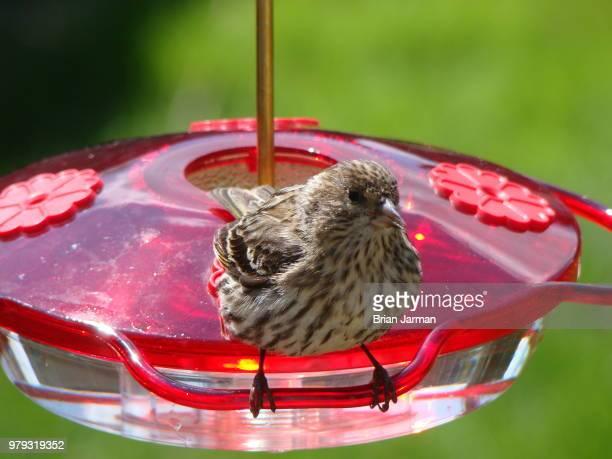 I'm not a humming bird, really I'm not!