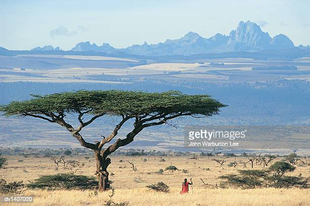 Maasai Warrior Standing Under Acacia Tortilis Tree, Looking at View of Mt Kenya Across Laikipia Plain, Kenya
