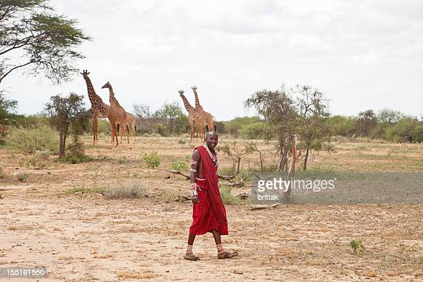 maasai warrior with giraffes in the background. african bush. - warrior person stock photos and pictures