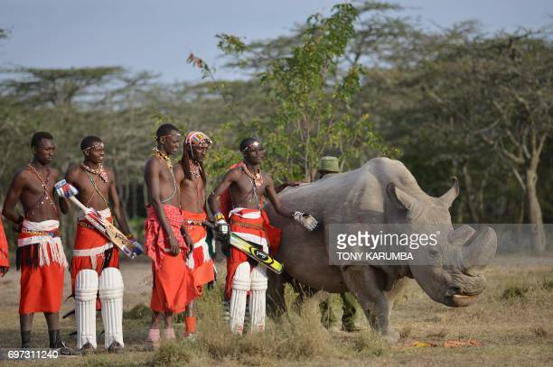 Maasai warriors pose with Sudan the only male of the last three northern white rhino subspecies on the planet on June 18 2017 following a charity...