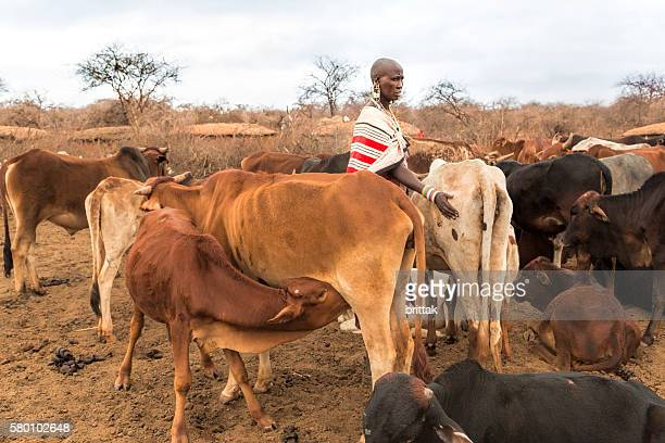 Maasai woman with cattle in village, Kenya, East Africa.