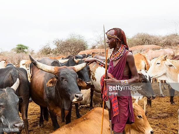 Young maasai warrior, moran con lanza y el ganado en el fondo.