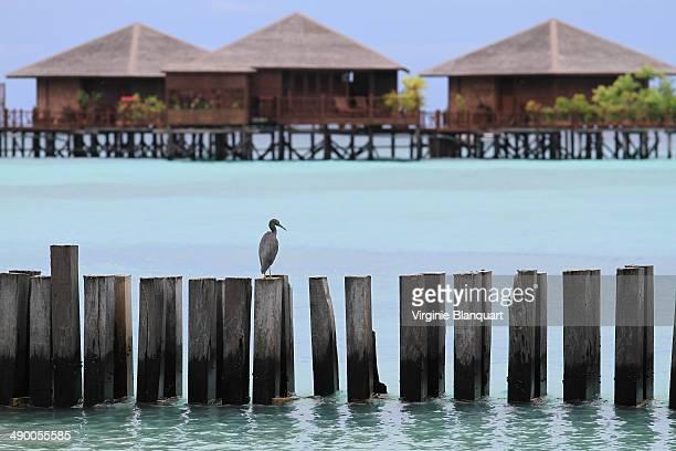 mabul island - mabul island stock photos and pictures