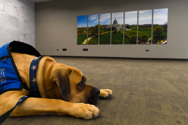 DC: Therapy Dogs Visit Congressional Staff On Capitol Hill