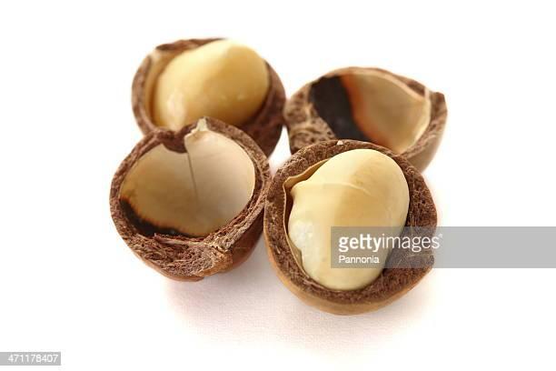 Isolé sur blanc de Macadamia