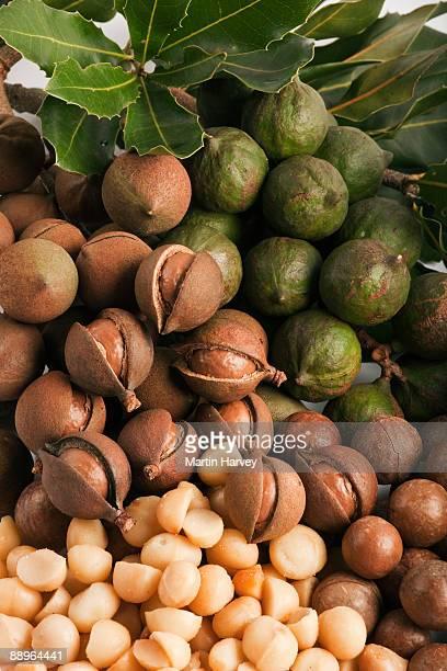 Macadamia nuts.