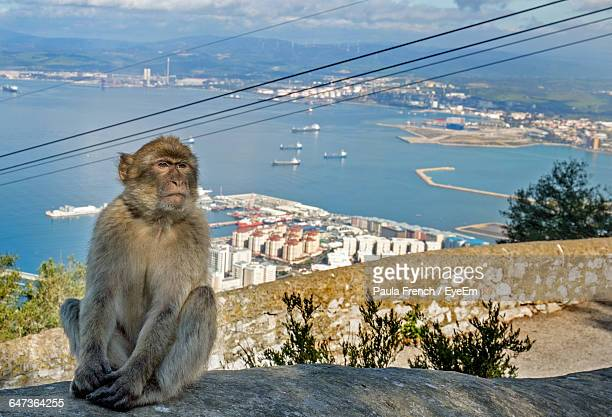 macaque sitting on rock against town and sea - rock of gibraltar stock photos and pictures