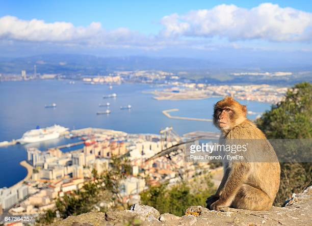 macaque sitting on stone by town - gibraltar stock pictures, royalty-free photos & images